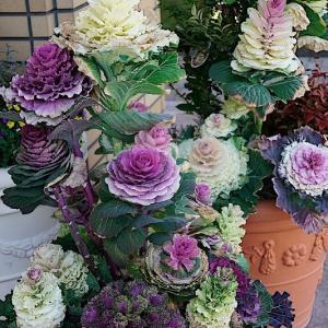 かんてんぱぱの売店の花たち 其の1 (2020年03月23日 月 ☀ α7RⅡ)