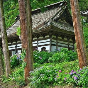 小室山妙法寺のアジサイ 其の1 (20202年06月29日 月 ☀ α7RⅡ)
