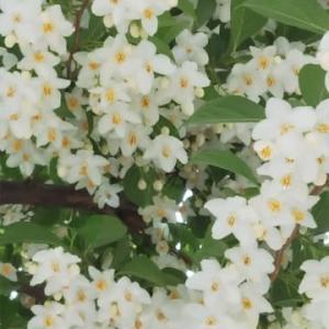 通院途中にみた花