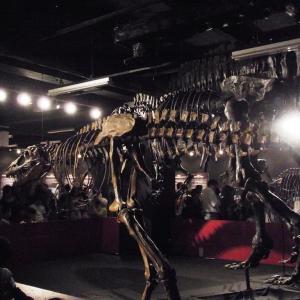 dinosaurus in tokyo tower:01