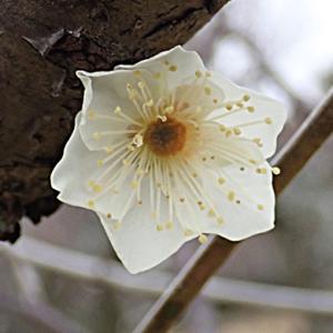 新冬至の花