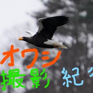 オオワシ撮影紀行!