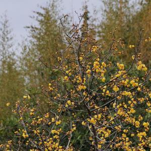 黄色い花!