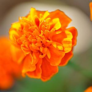朝陽に眩しそうな花!