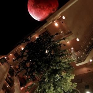 皆既月食見れませんでした〜