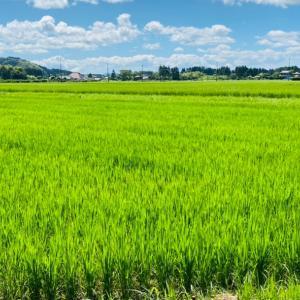 良い日本の夏を過ごしている