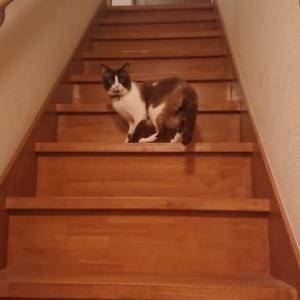 逃げる猫・・=͟͟͞͞⊂( 'ω' )=͟͟͞͞⊃