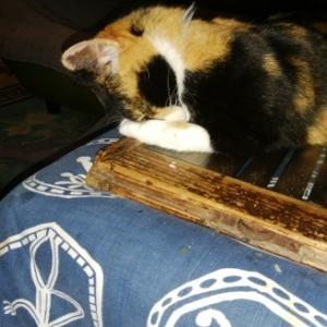 三毛猫ひかちゃん -93- 今年もお世話になりました。