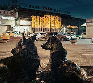 犬は歌わない -1- SPACE DOGS