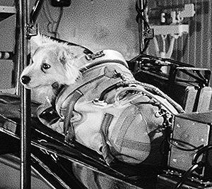 犬は歌わない -2- SPACE DOGS