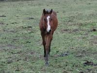 クラウドファンディング トウカイテイオーの最後の産駒を種牡馬にしたい!!