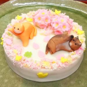 ちょこショコラっ茶 番外編☆春爛漫♪猫ちゃんが遊ぶ和菓子ケーキ☆田町梅月さん・浜松市