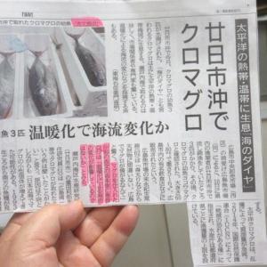 瀬戸内海で獲れたマグロを買いました。