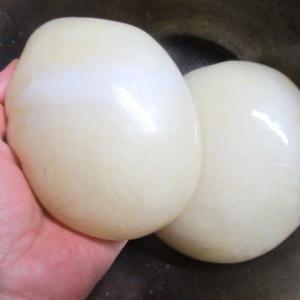 ヤナギダコの子 「タコマンマ」で醤油漬けを作りました。