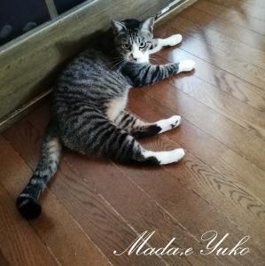 ◆今朝の猫チャンたち