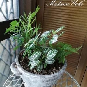 ◆小さな観葉植物です