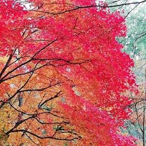 ◆中島公園の紅葉