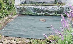 除草シート張りと実生当歳苗のキリン接ぎ。