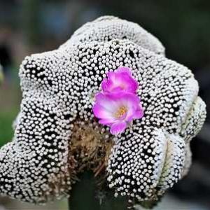 ルーシー綴化の花とサボちゃんの花他にエイリアン碧ラン