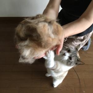 家出する猫2/毛玉作り