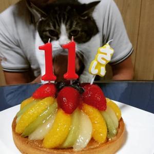 チロルさん誕生日。