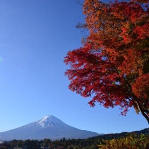 河口湖の紅葉と富士山(2019)①