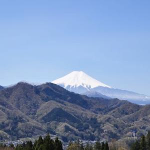 雨上がりの富士山と桜~大月市①
