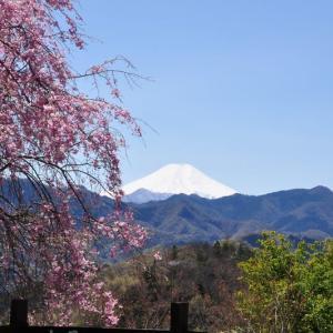 「大月エコの里」のハナモモ・しだれ桜・富士山~大月市②