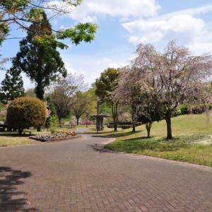 猿橋公園の御衣黄桜と八重桜~大月市①