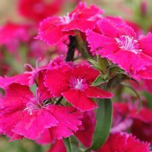 畑と畑の近くに咲いていた花①