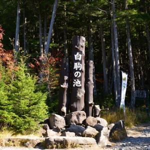 白駒池の紅葉と苔~北八ヶ岳①(回想)