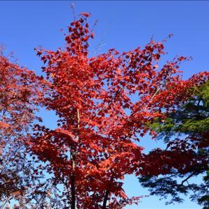 白駒池の紅葉と苔~北八ヶ岳③(回想)