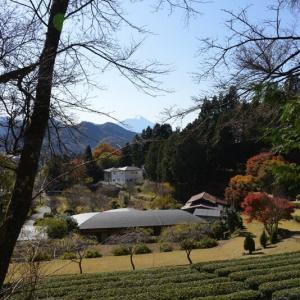 紅葉と富士山~大月市
