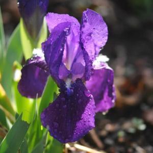 庭に咲いた花たち