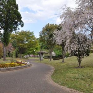 猿橋公園の八重桜と御衣黄桜~大月市①
