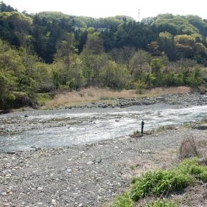 河原の八重桜と釣り人~大月市