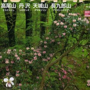 長九郎山のアマギシャクナゲ~伊豆①(回想)