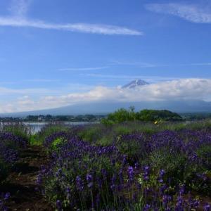 ラベンダーと富士山~河口湖大石公園①(回想)