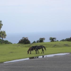 宮崎の旅 都井岬の御崎馬 見ました ♪