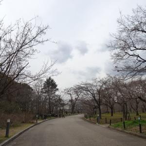 京都府立植物園 春の花 ユキワリイチゲ  ♪