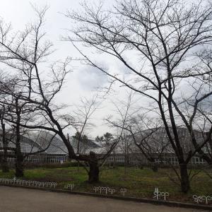 京都府立植物園  観覧温室   アンスリウム ♪