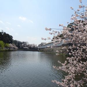 彦根城 桜を見に その 二 ♪