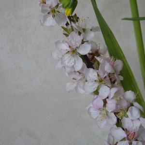 四月 春の花 スイセン チューリップ 麦 ♪