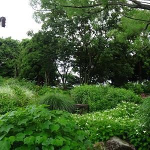 水生植物公園みずの森  ハス池 ♪
