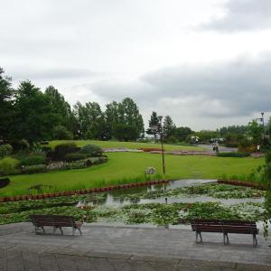 水生植物公園みずの森  睡蓮  ♪