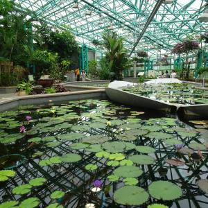 水生植物公園みずの森 ロータス館の睡蓮   (2) ♪