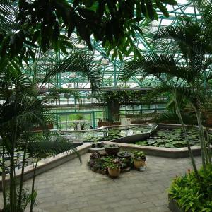 水生植物公園みずの森 ロータス館の  珍しい花 ♪