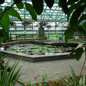 水生植物公園みずの森 ロータス館  ♪