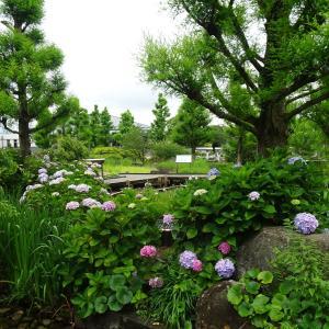 水生植物公園みずの森   カラー   ♪