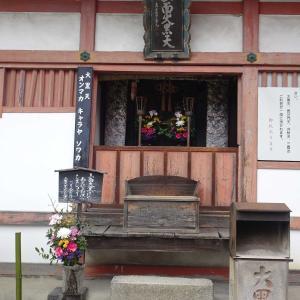 京都 東寺 その 4 染井吉野の古木 ♪